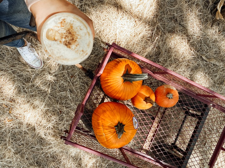 Pumpkin Patch Time – A Guide to Visiting a Pumpkin Patch withKids